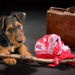 Hund auf Reisen mit Koffer