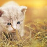 Kätzchen-Pixabay