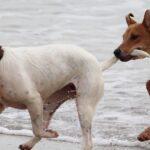 Spielende Hunde im Meer