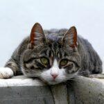 Katze Übergewicht Virbac VETERINARY HPM
