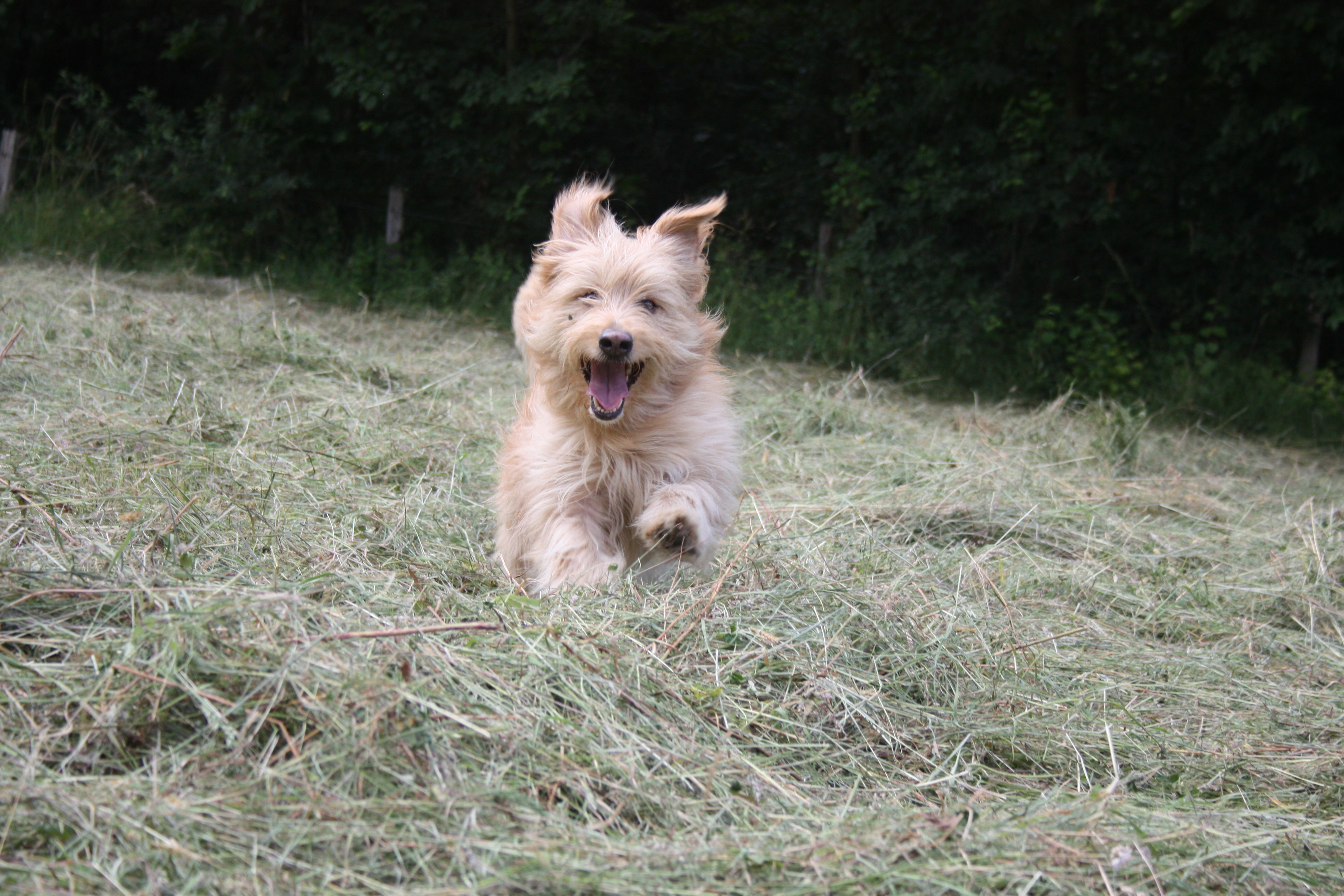 Senior Hund Virbac VETERINARY HPM